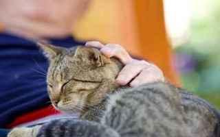Animali: malattie gatto