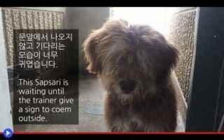 Animali: animali  cani  razze  corea  asia