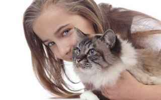 gatto  fusa gatto