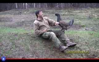 animali  galli  uccelli  cedroni