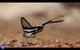 Animali: animali  insetti  lepidotteri  farfalle