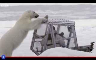 Animali: animali  orsi  artico  natura