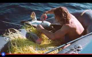 Animali: animali  tartarughe  mare  oceano