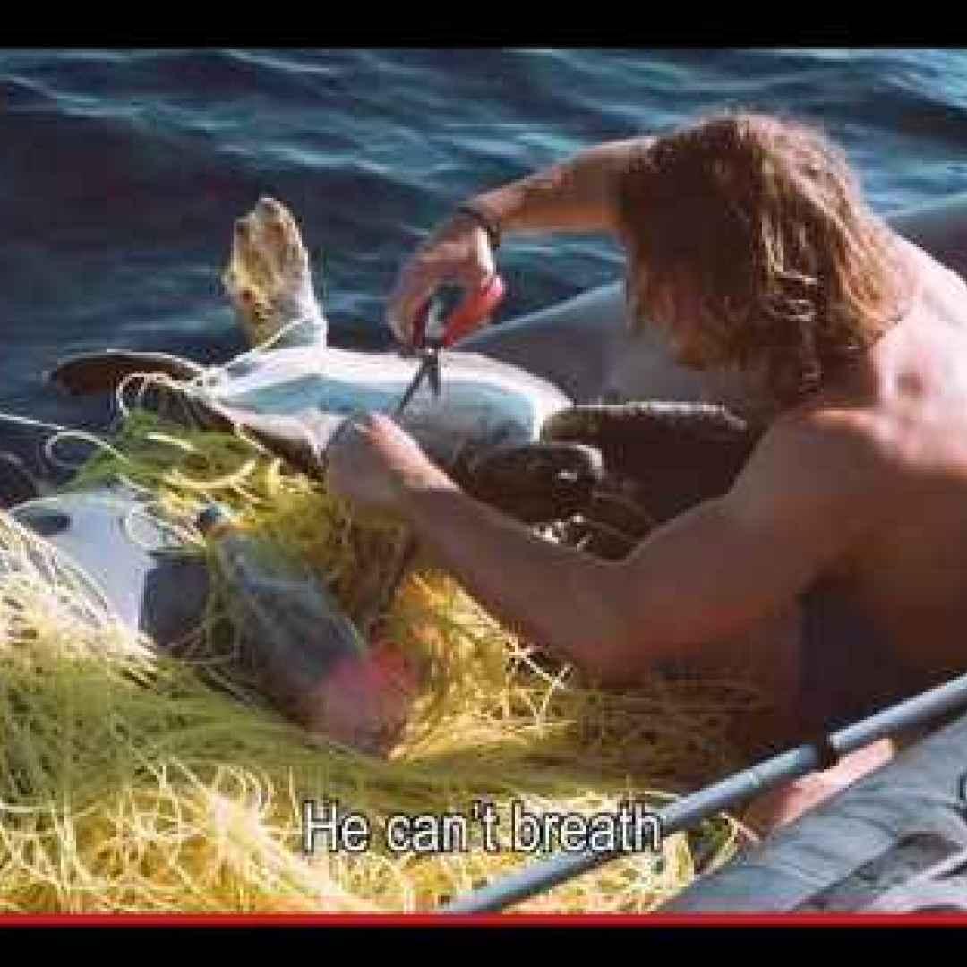 animali  tartarughe  mare  oceano