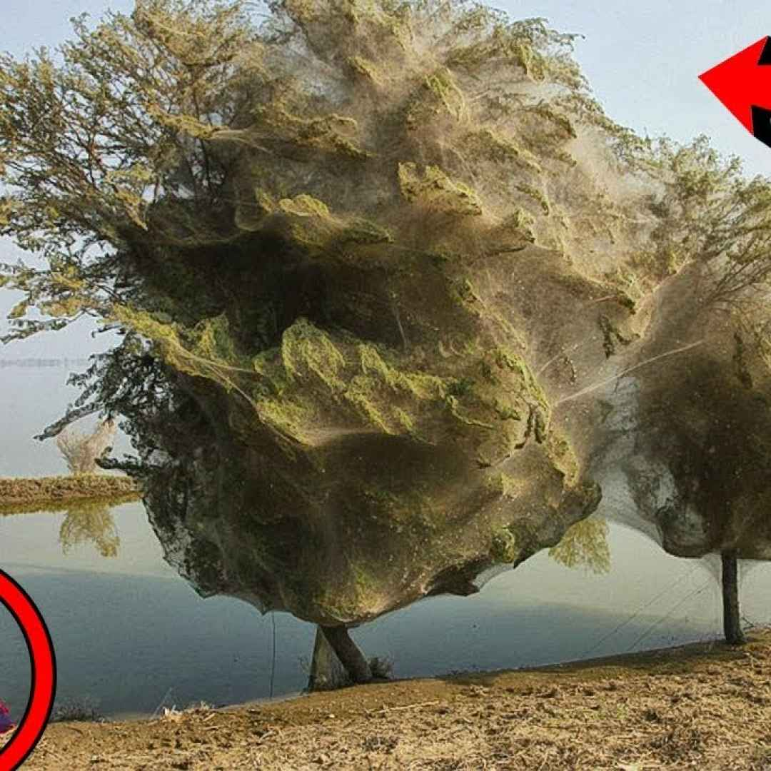 fantasma alberi video paura pakistan