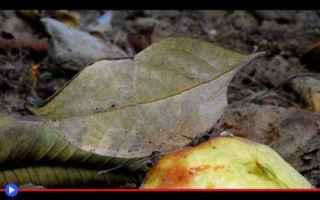 Animali: animali  artropodi  insetti  lepidotteri