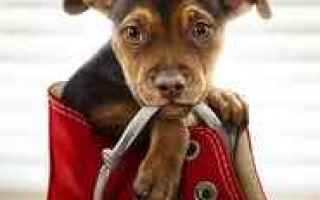 A Dog's Way Home watch full movie hd online 2019<br />A dog travels 400 miles in search of her ow