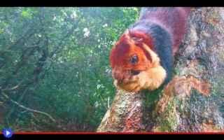Animali: animali  scoiattoli  roditori  india
