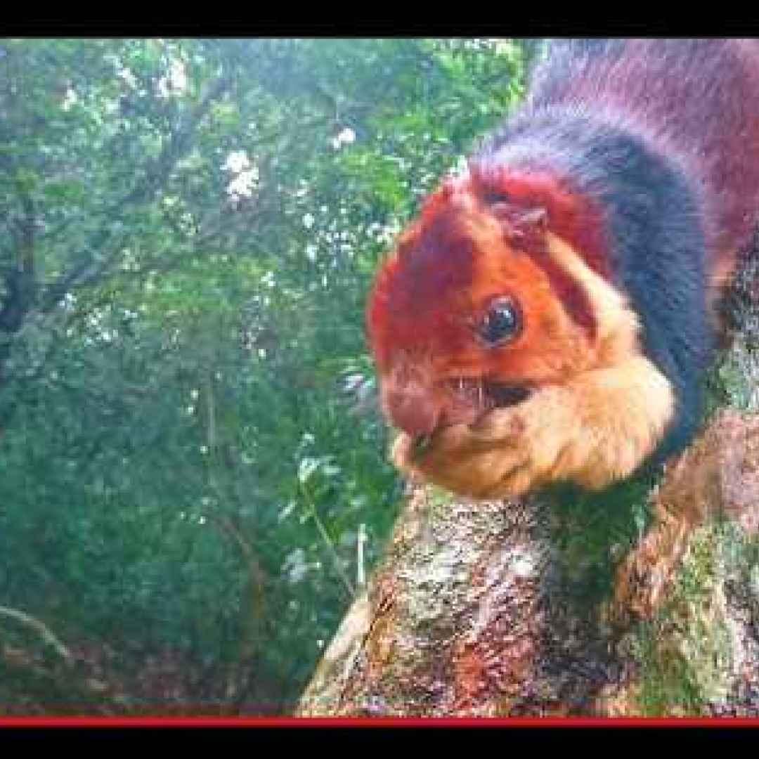 animali  scoiattoli  roditori  india