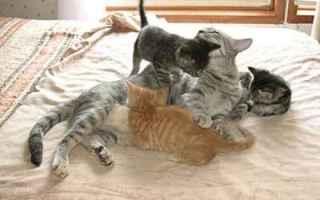 Animali: perchè i gatti fanno la pasta