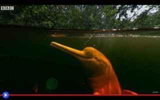animali  delfini  creature  leggende