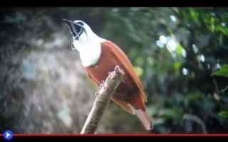 Animali: uccelli  animali  natura  centroamerica