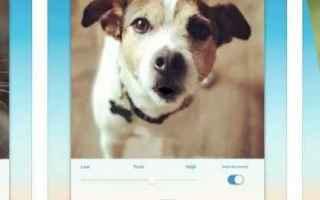 app cani  divertenti  app translate