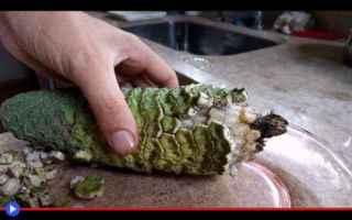 Gastronomia: frutta  piante  vegetali  gastronomia