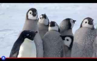 Animali: animali  pinguini  antartide  battaglie