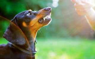 Animali: Cagnolina aggressiva dopo il parto, come fare? Esempio pratico