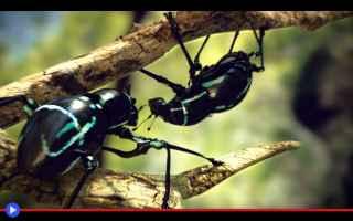 Animali: animali  insetti  scienza  biologia