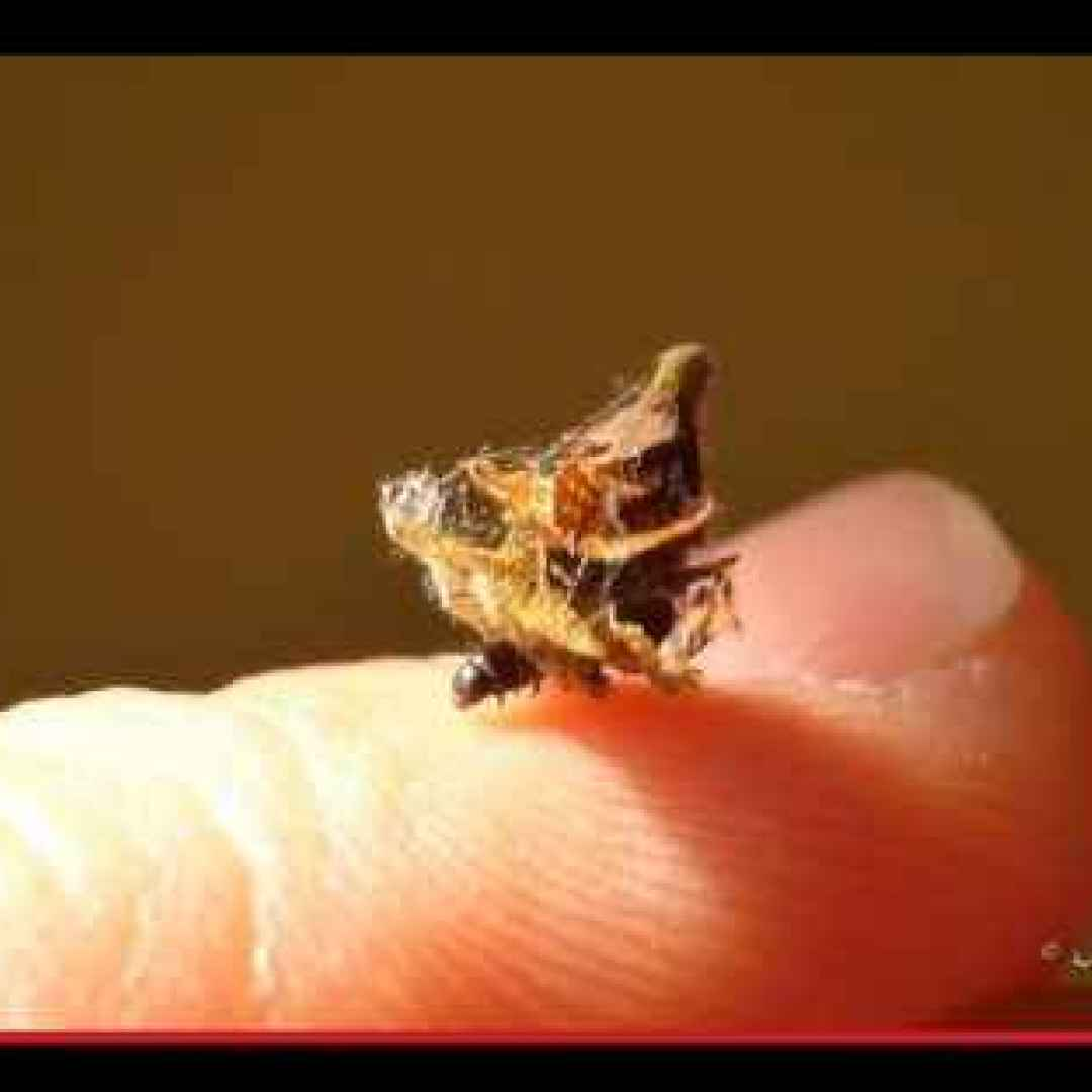 animali  insetti  evoluzione  mimetismo