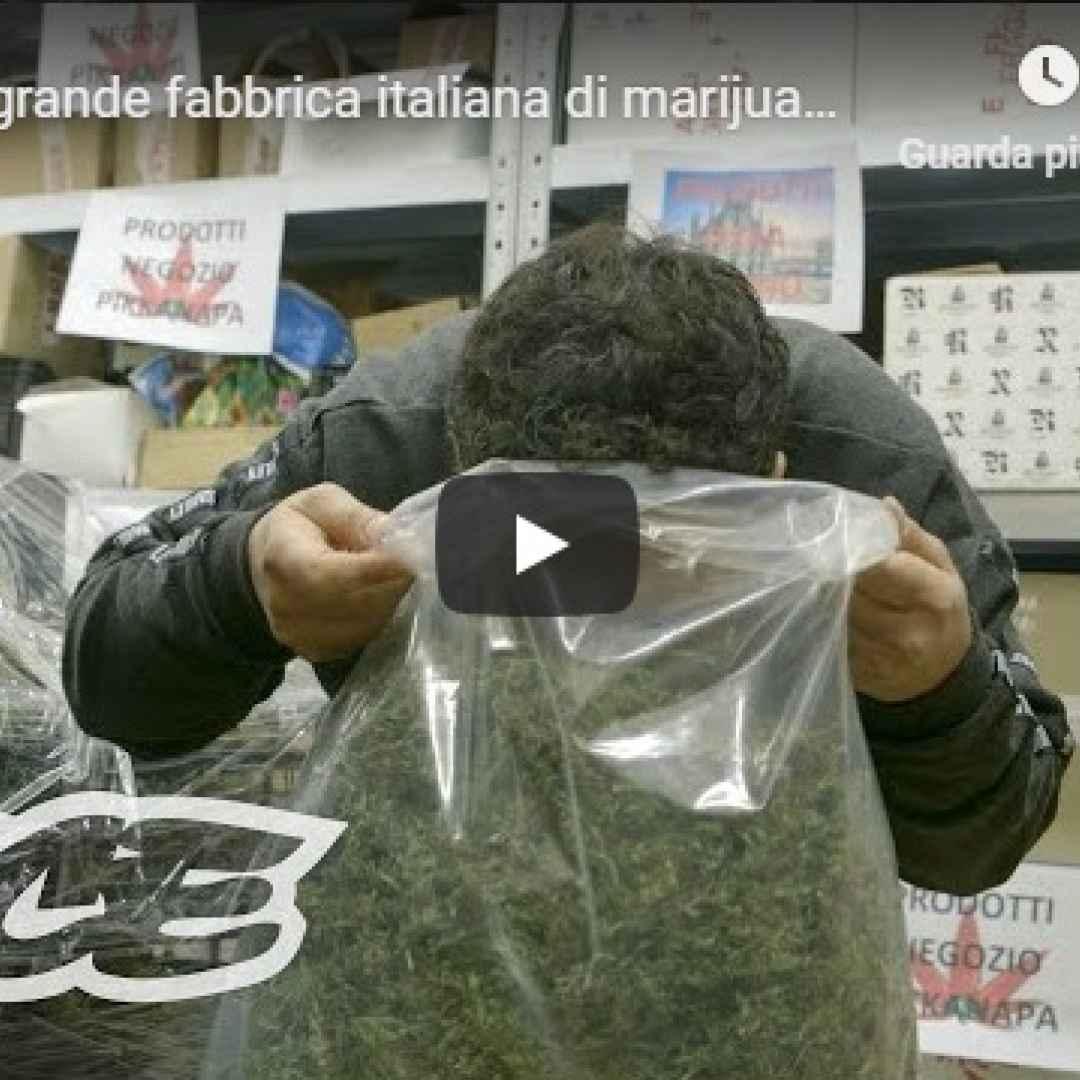 marijuana legale video cannabis italia