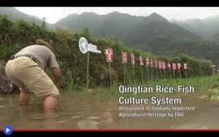 Ambiente: agricoltura  cina  tecniche  sistemi