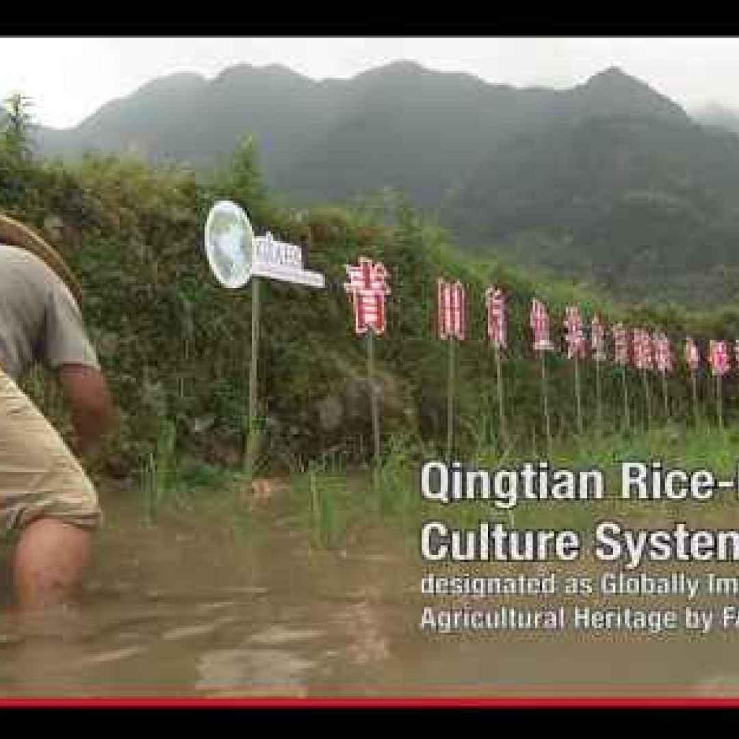 agricoltura  cina  tecniche  sistemi