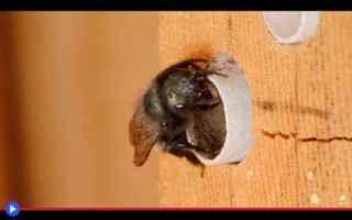 Animali: insetti  imenotteri  api  tubi