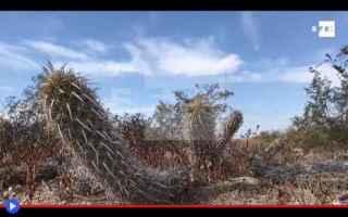 Ambiente: piante  cactus  messico  deserto  strano