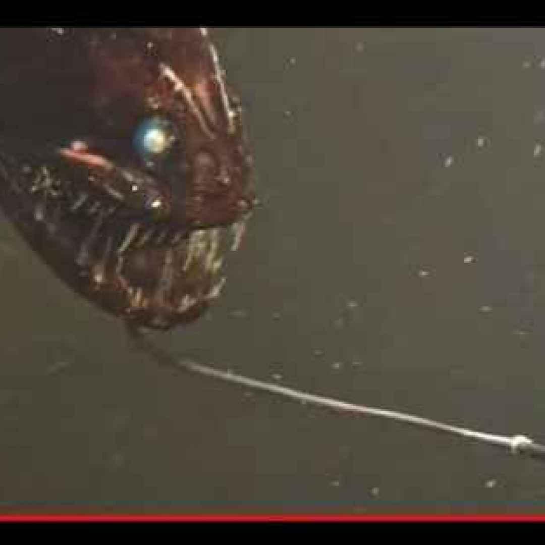 animali  pesci  mostri  abissi  mare