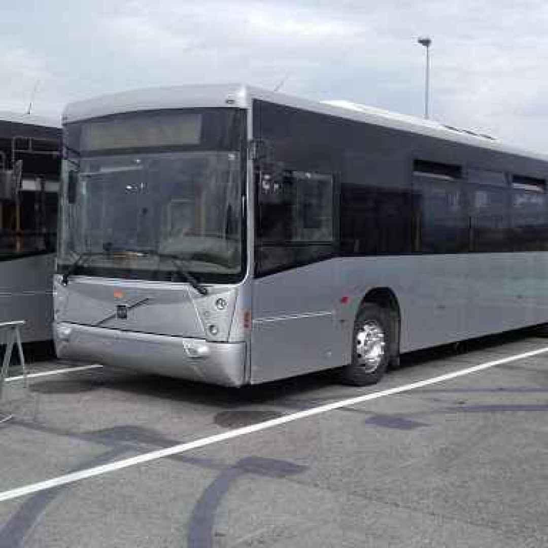 atac  roma  trasporto pubblico  flambus