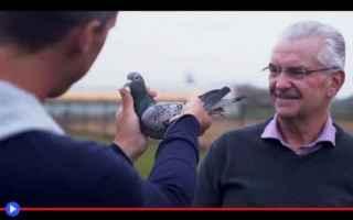 Animali: animali  uccelli  piccioni  corse  cina
