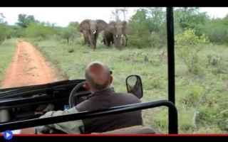 animali  elefanti   sudafrica  guida