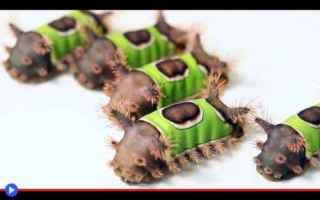 animali  insetti  bruchi  falene