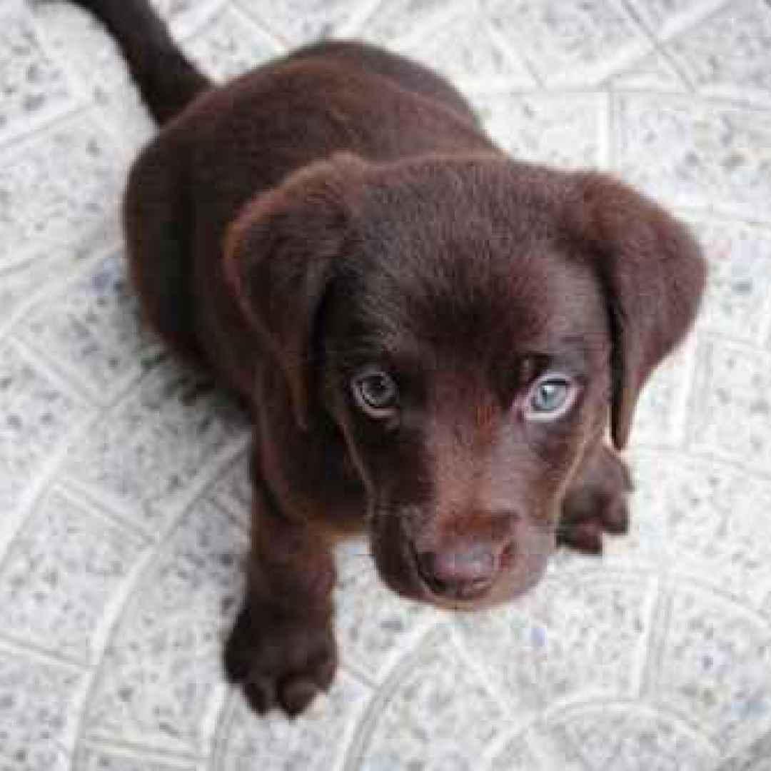 allergia cane  intolleranza cane