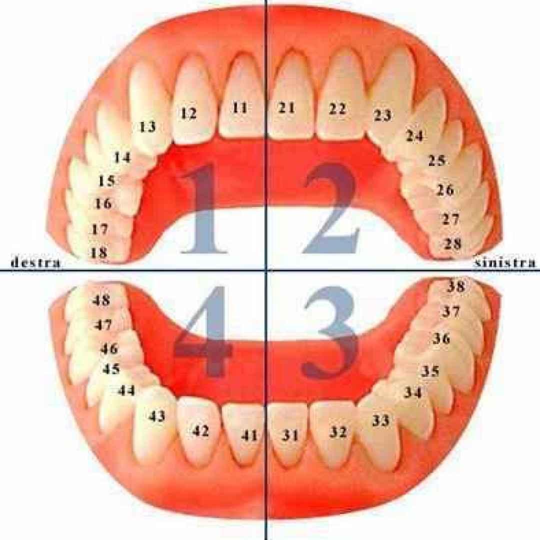 numerazione  denti  odontoiatria