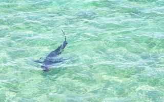 avvistamento squalo  squalo palermo