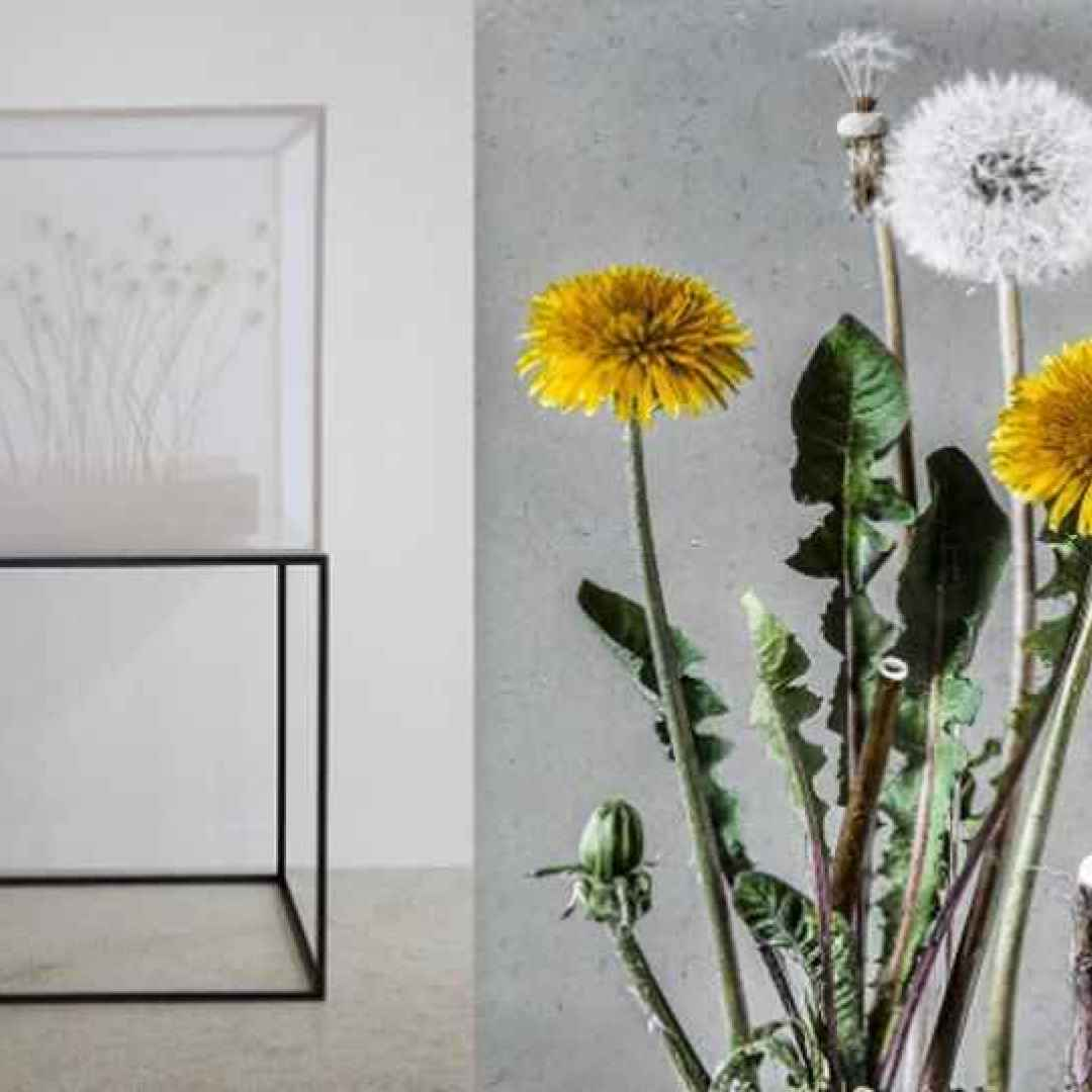 mostre  arte botanica  in-flore scientia