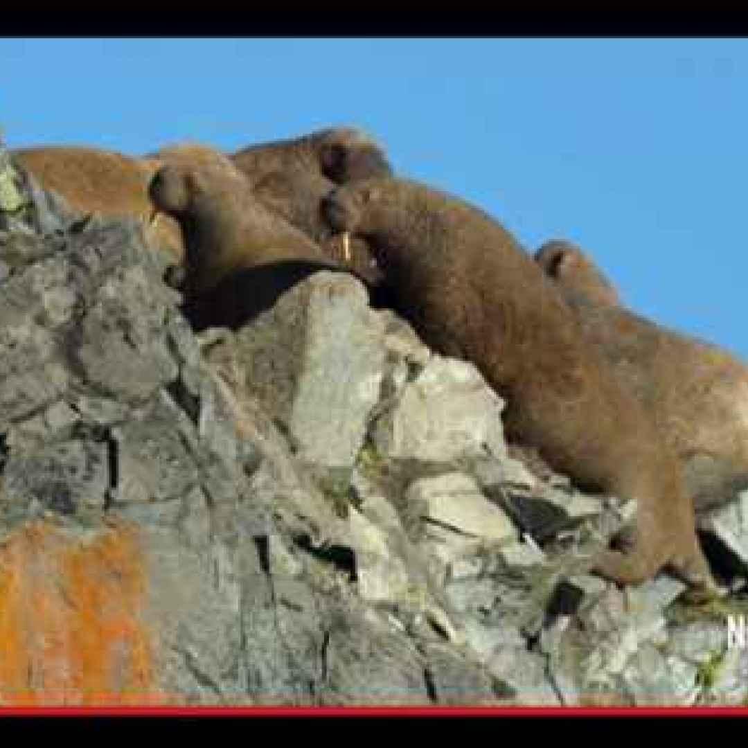 animali  natura  disastri  siberia