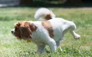 cane  traversine  tappetini igienici