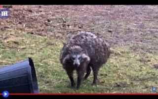 dal Mondo: animali  inghilterra  nottinghamshire