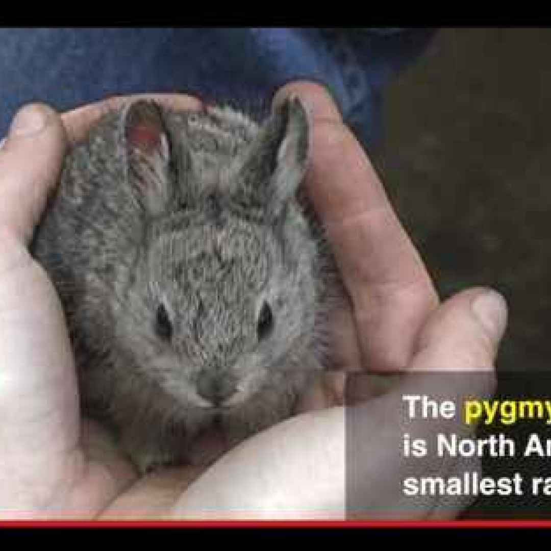 animali  conservazione  ambiente  natura