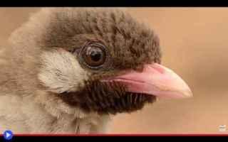 vai all'articolo completo su uccelli