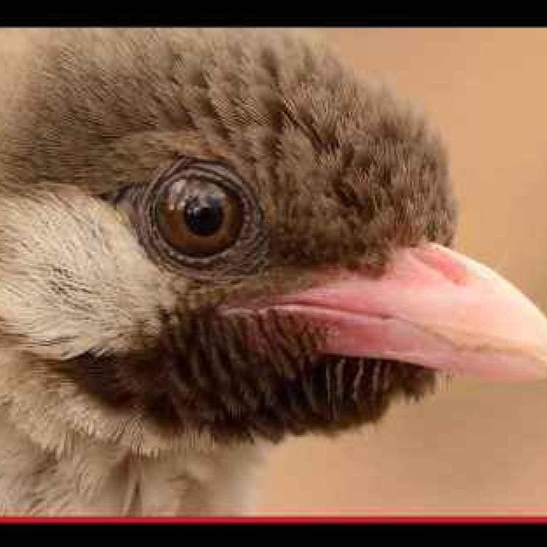 animali  uccelli  africa  popoli