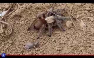 animali  insetti  anfibi  rettili  preda