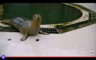 Animali: foche  animali  mare  oceano  canto