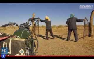 Ambiente: piante  vegetazione  cina  mongolia