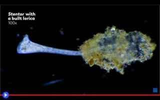 animali  protisti  microrganismi
