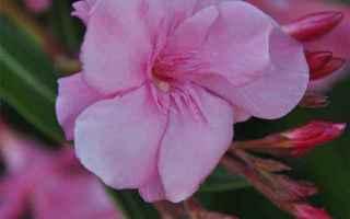 piante  fiori  giardino  casa  balcone