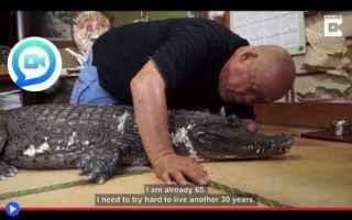 Animali: giappone  animali  caimani  alligatori