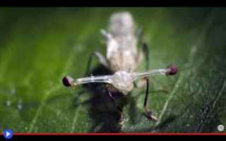animali  insetti  artropodi  ditteri