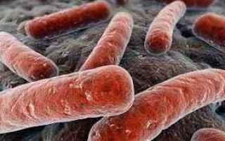 Medicina: tubercolosi  malattie-infettive